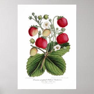 Stawberry ポスター
