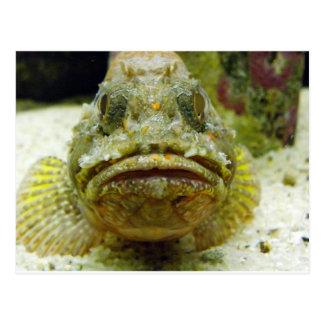 Stonefish ポストカード