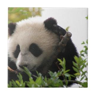 Su林のサンディエゴの動物園のジャイアントパンダの小熊 タイル