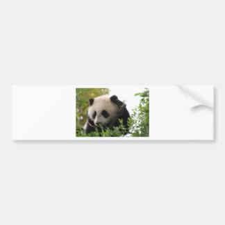 Su林のサンディエゴの動物園のジャイアントパンダの小熊 バンパーステッカー