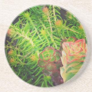#succulents、かわいらしいSucculents コースター