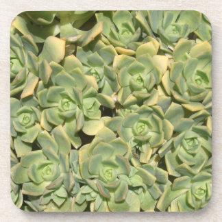 Succulents コースター