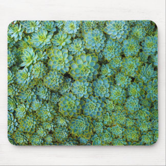 Succulents - Echeveriaの植物 マウスパッド