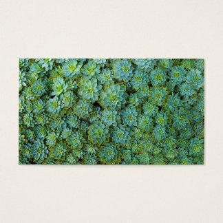 Succulents - Echeveriaの植物 名刺