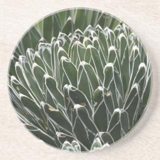 Succulents - WOWCOCO コースター