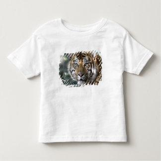 Sumatranのオスのトラ(ヒョウ属のチグリス川のsumatrae) トドラーTシャツ