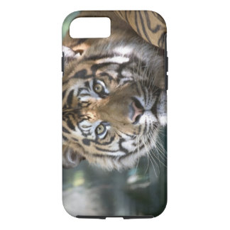 Sumatranのオスのトラ(ヒョウ属のチグリス川のsumatrae) iPhone 8/7ケース
