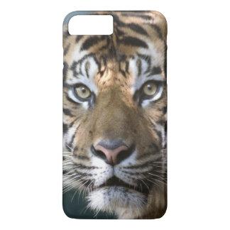 Sumatranのオスのトラ(ヒョウ属のチグリス川のsumatrae) iPhone 8 Plus/7 Plusケース