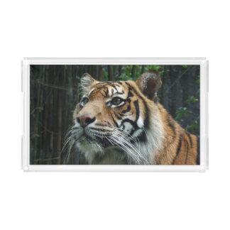 Sumatranのトラのアクリルの皿 アクリルトレー