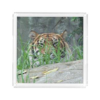 Sumatranのトラのアクリルの香水の皿 アクリルトレー