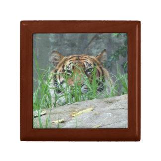 Sumatranのトラのギフト用の箱 ギフトボックス