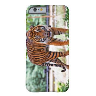 Sumatranのトラの写真のAppleのiPhone6ケース Barely There iPhone 6 ケース