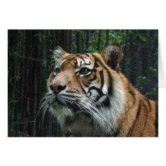 Sumatranのトラの挨拶状 カード