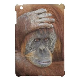 Sumatranのメスのオランウータン、Pongoのpygmaeus iPad Miniカバー