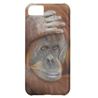 Sumatranのメスのオランウータン、Pongoのpygmaeus iPhone5Cケース