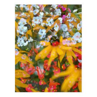 Sumerの花 ポストカード