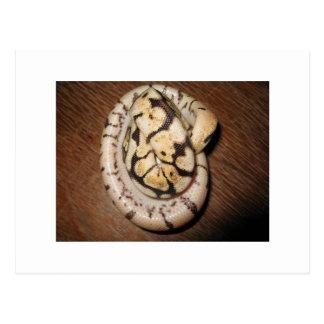 Sundinの球の大蛇 ポストカード