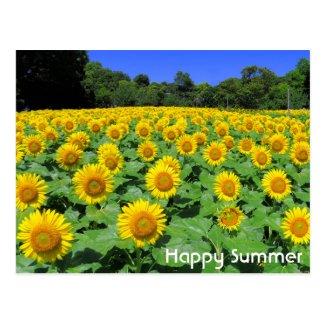 Sunflower :Postcard ポストカード