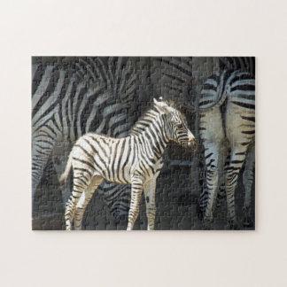 Sunny Baby Zebra ジグソーパズル