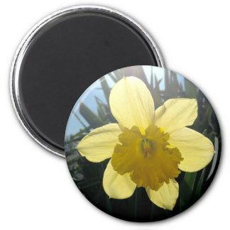 Sunrayの円形の磁石 マグネット