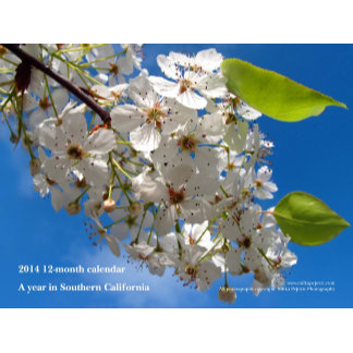 Calendars / Photo Calendars
