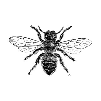 Pen and Ink Illustrations