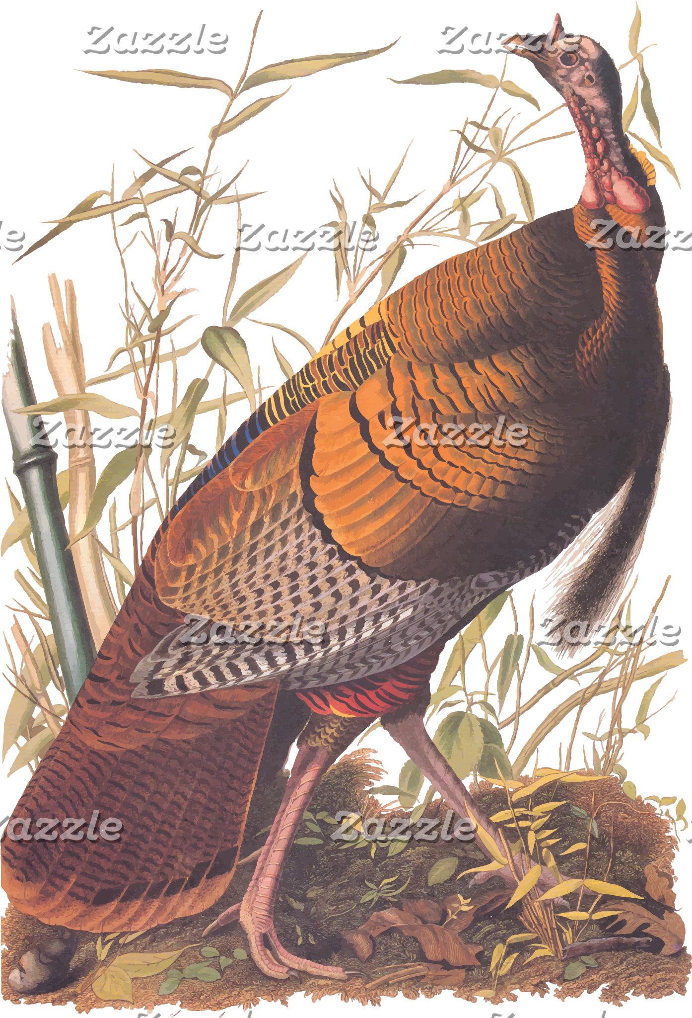 Wild Turkey (Plate 1)