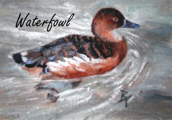 Birds - Waterfowl