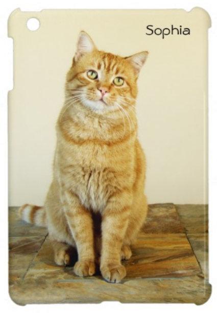 Cat Cases