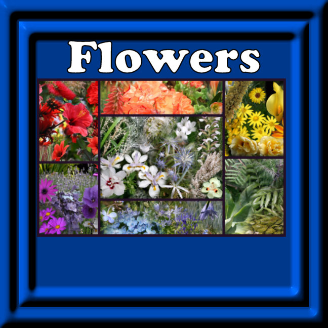 Flower Photo Collage Rainbow Colors