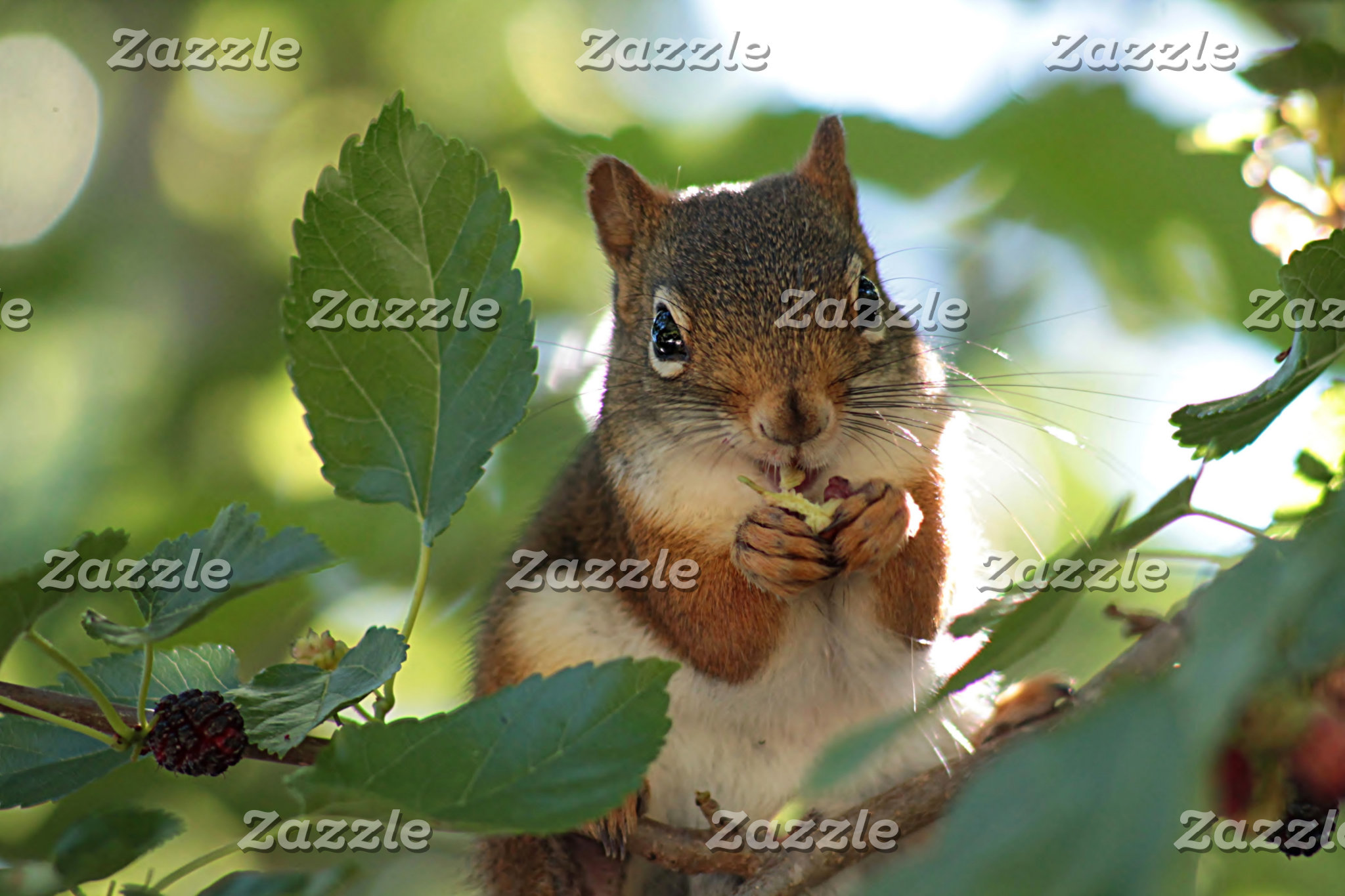 Nature and Wildlife Calendars