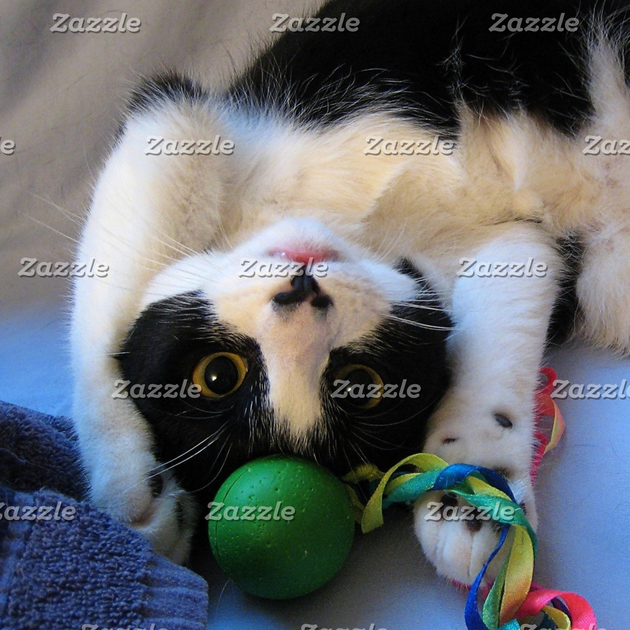 Black and white cat - playful cat - Funny cat
