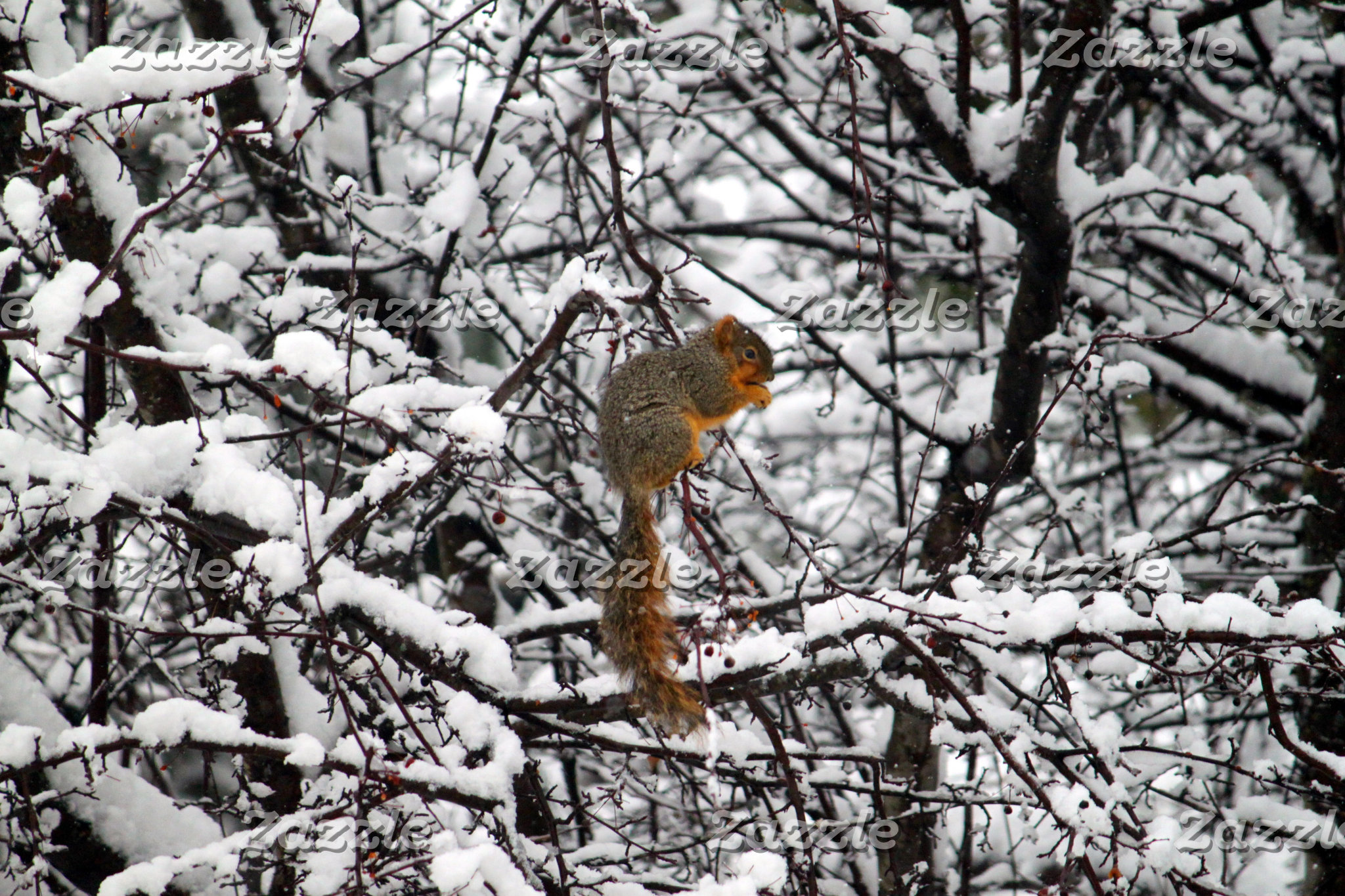Squirrels in the Snow