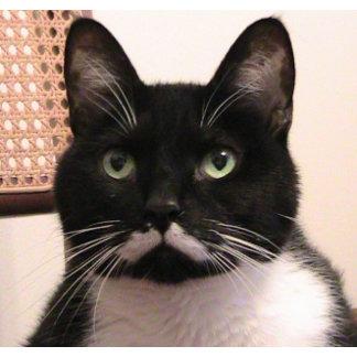 Tuxedo Cat ( with Moustache)