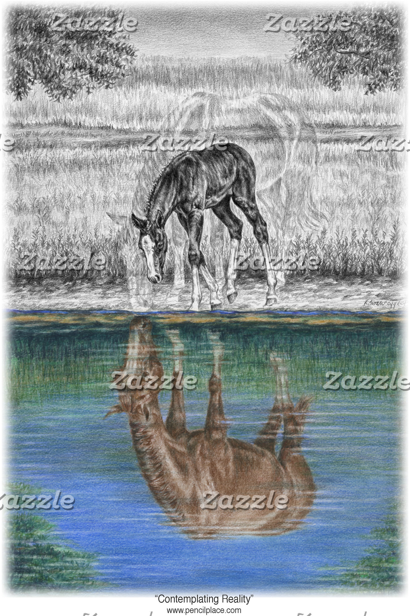 Horse Foal Water Reflection