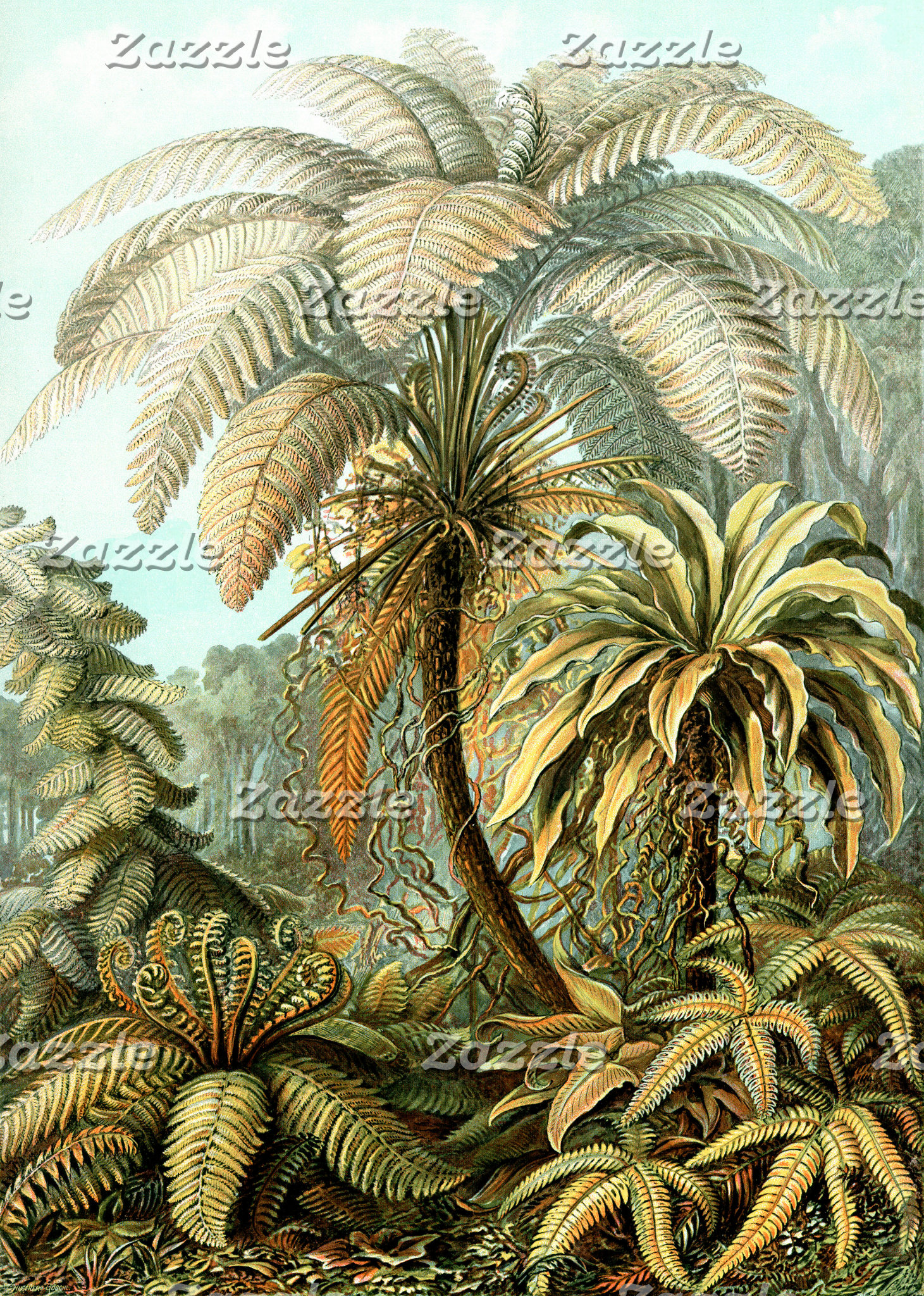 Ernst Haeckel Filicinae