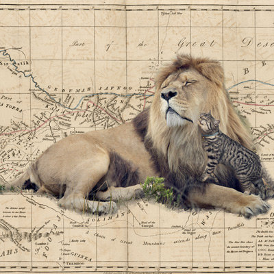 cat and lion - africa map - felines