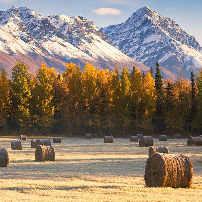Alaska Farming