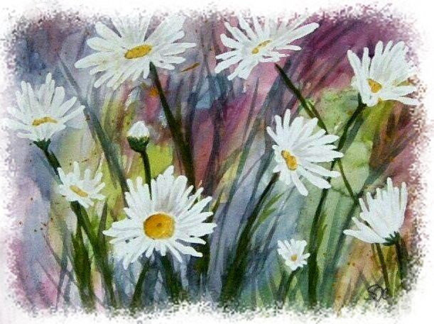 Daisies - FIELD OF WHITE
