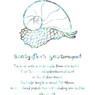 【スケーリーフット(螺鈿風-白】 Scaly-foot gastropod (White Raden