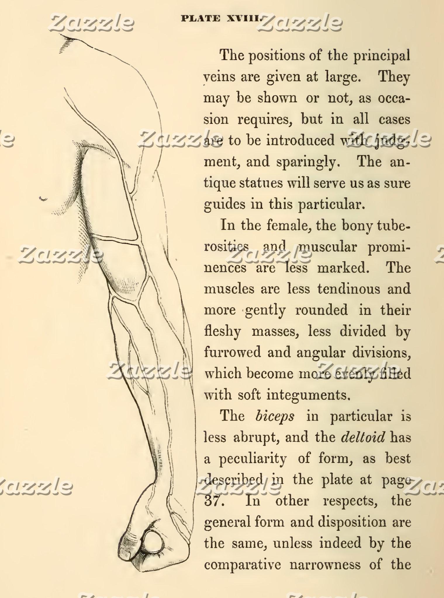 Vintage Anatomy   Veins of the Arm