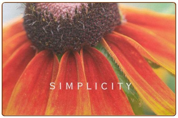 Simplicity Orange Wildflower Photo