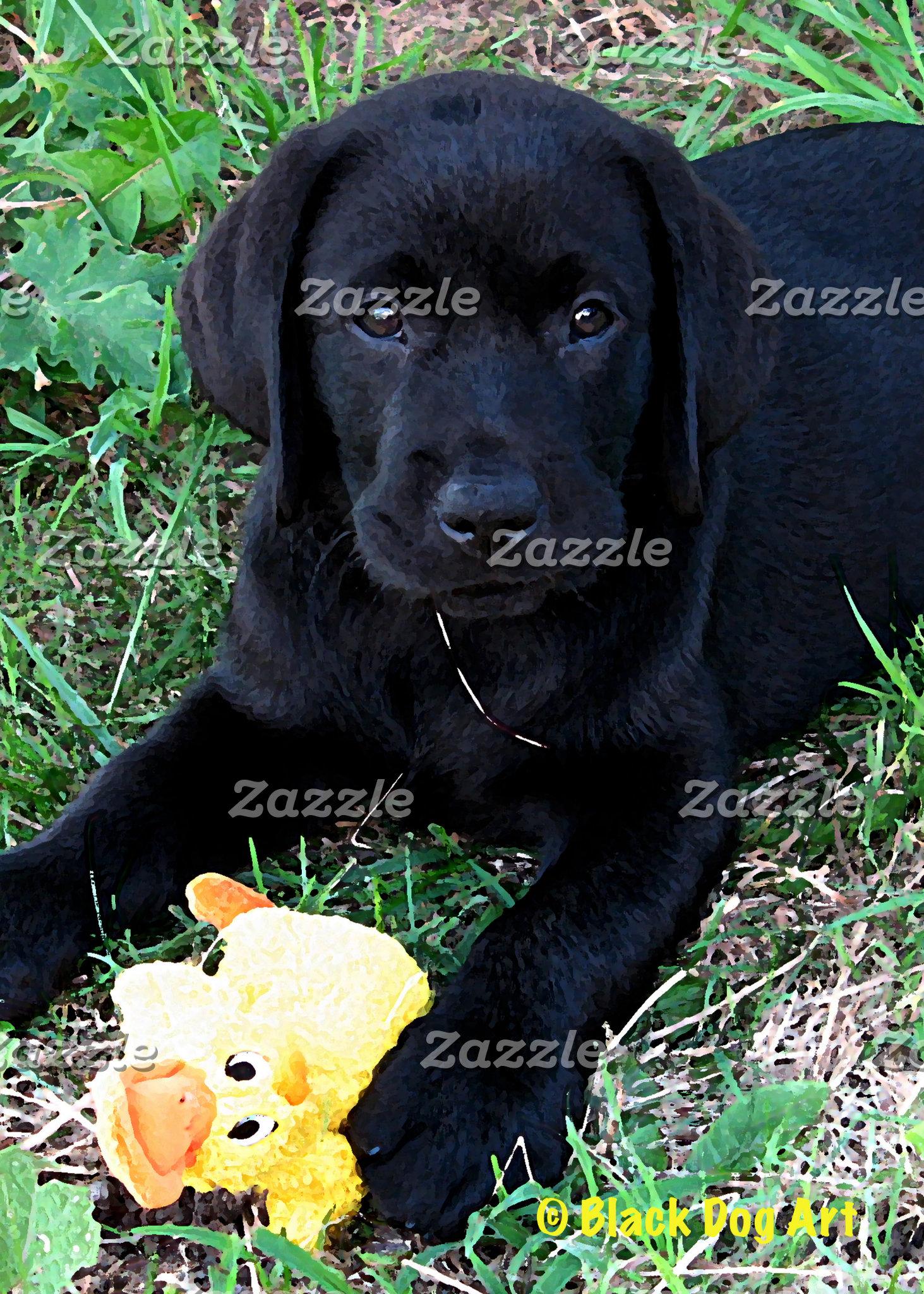 Black Labrador - Duck Days of Summer