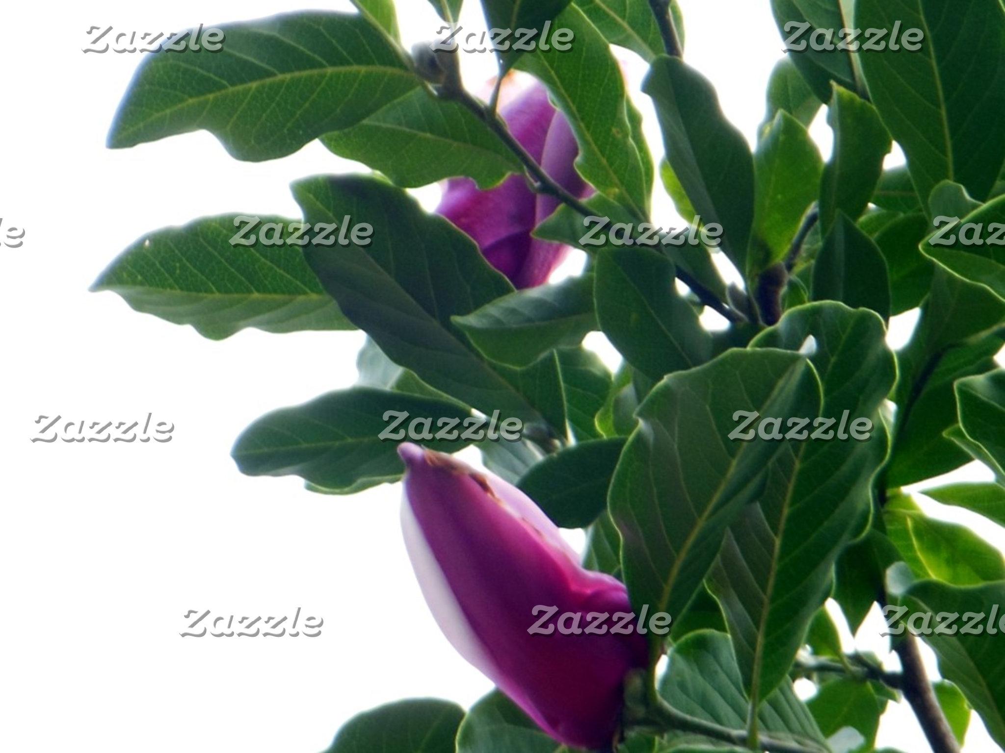 Aquatic Flowers Plants