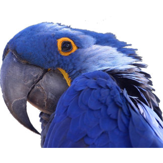 Uccelli (Birds)