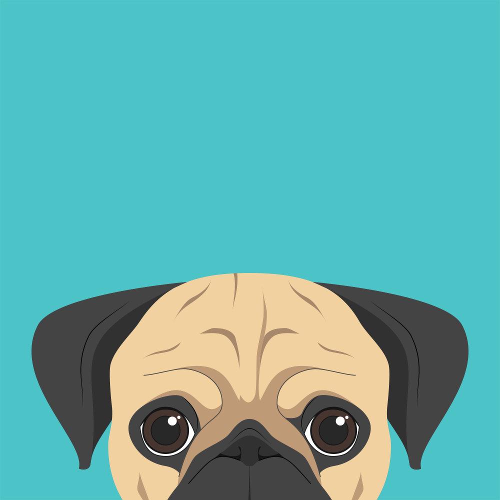 Pug Dog Portrait illustration