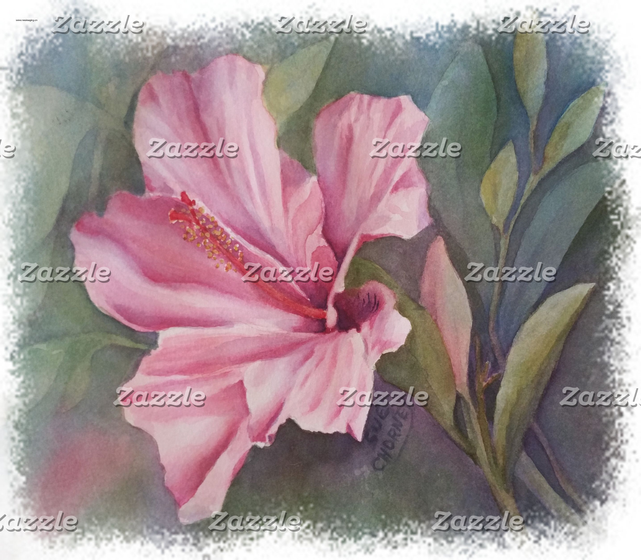 Hibiscus - TROPICAL PINK