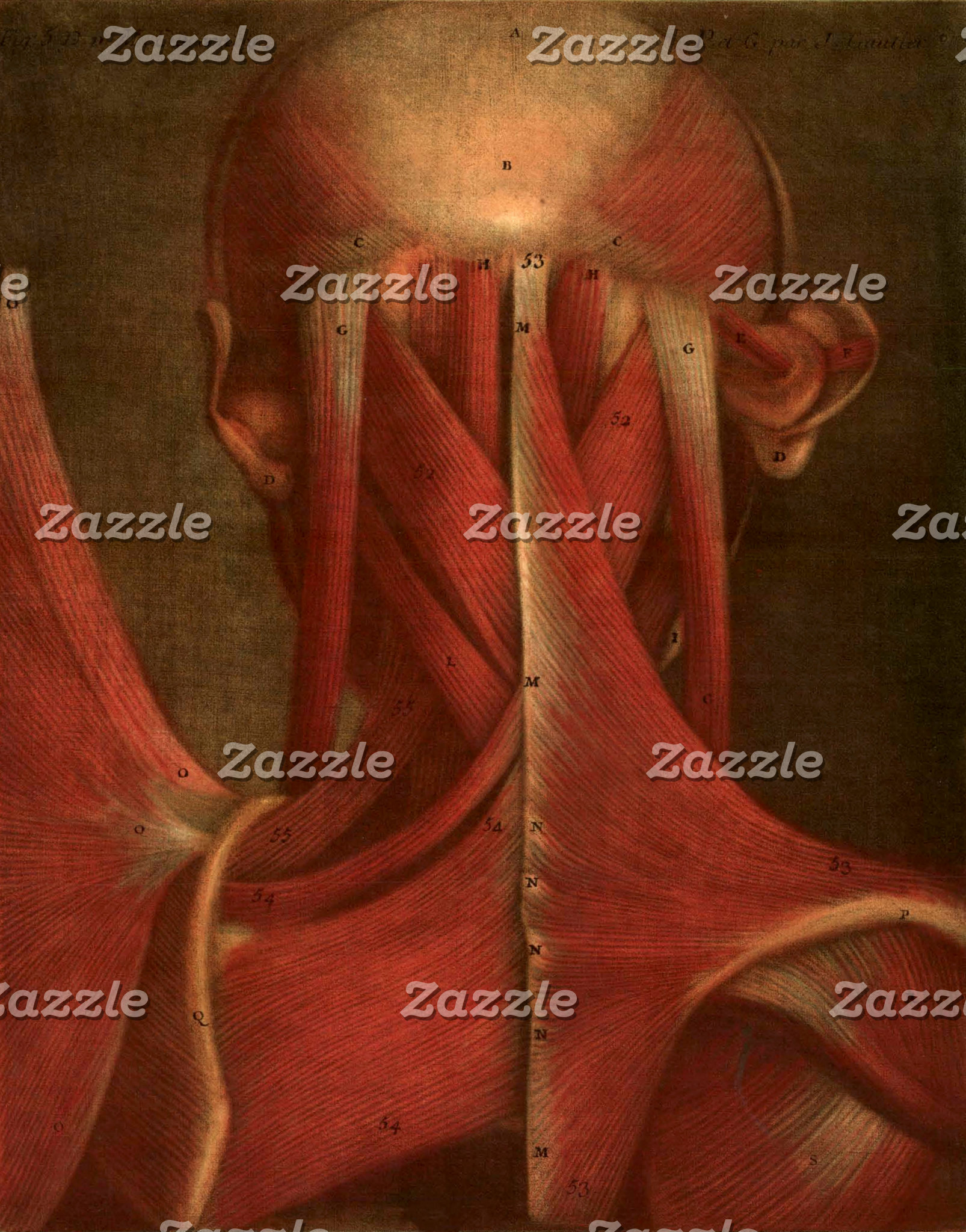 Vintage Anatomy Illustration   Neck
