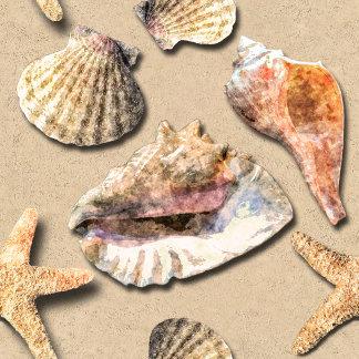 Sea Shells on Beach Sand