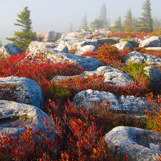 Dolly Sods Wilderness Fall Scenic With Fog